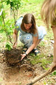 Burying the embryo and planting a memorial tulip tree during a mizuko-kuyo ceremony planned by my mom and friends.