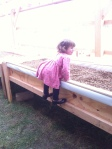 Alaina scoping out the amazing progress the work party made on the aquaponics system in the greenhouse.