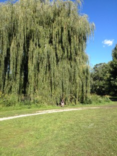 Some very, very cool willow trees around the lake.